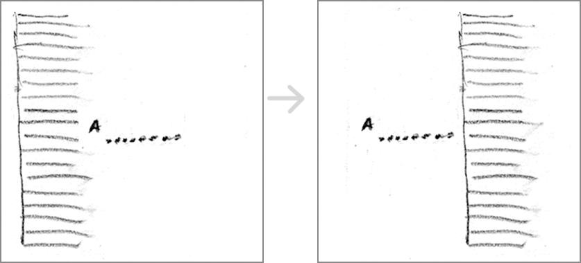 emphasize vertical line